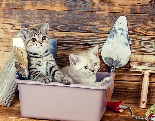 two little kittens sitting together in washbowl - hundezubehör diy stock-fotos und bilder