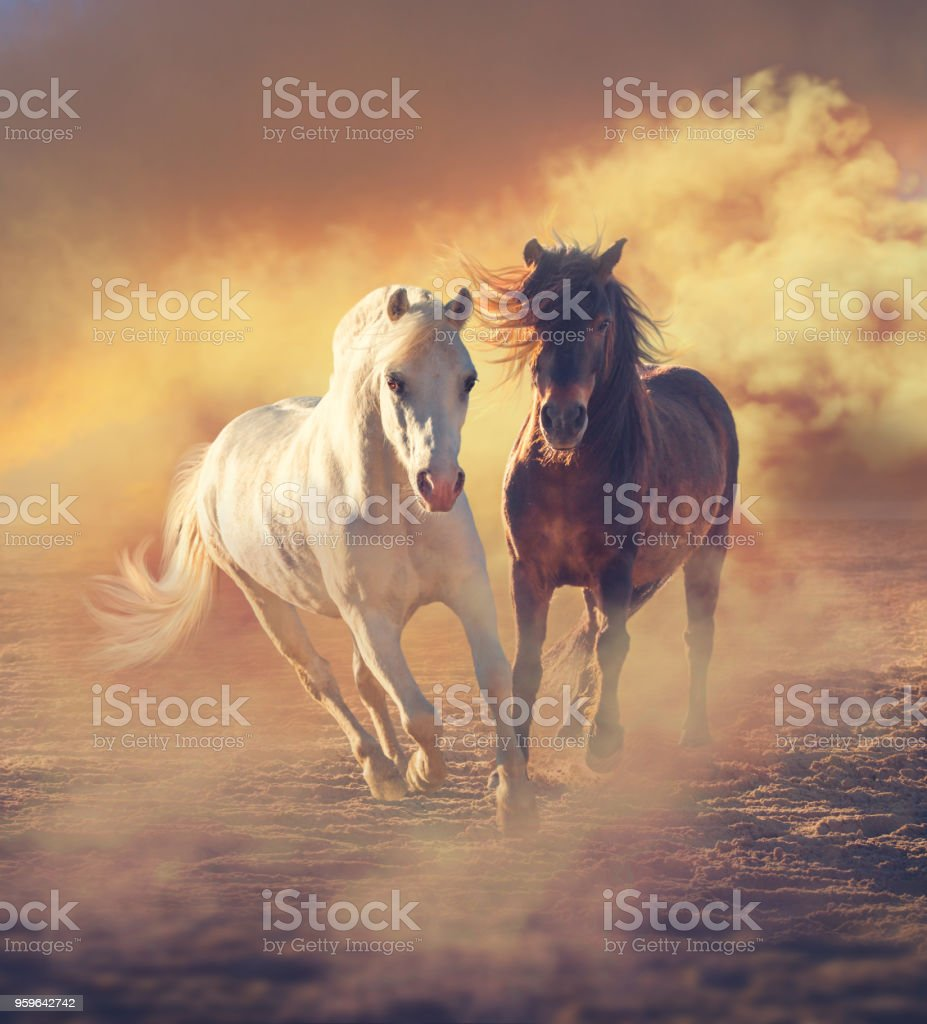 Dos pequeño pony run en el polvo en las nubes al atardecer - Foto de stock de Aire libre libre de derechos