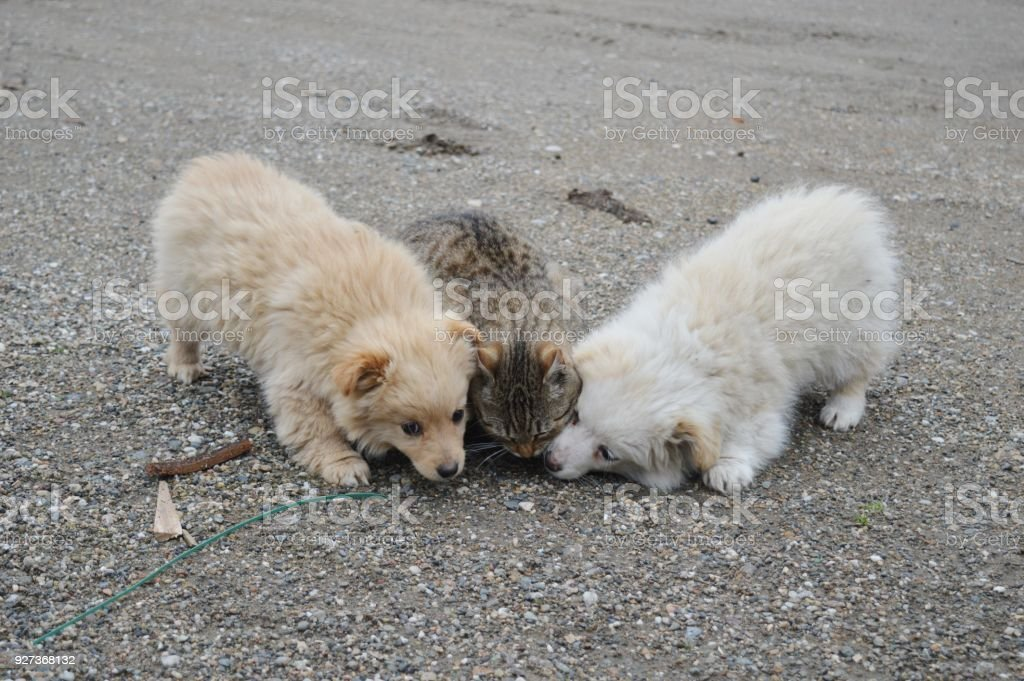 two little puppies of different colors and a cat - Royalty-free Animal Stock Photo
