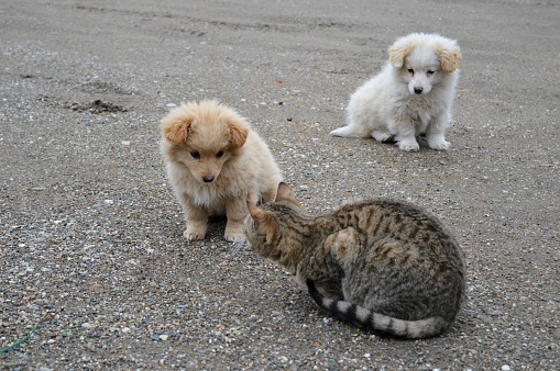 Two Little Puppies Of Different Colors And A Cat Stock Photo - Download Image Now