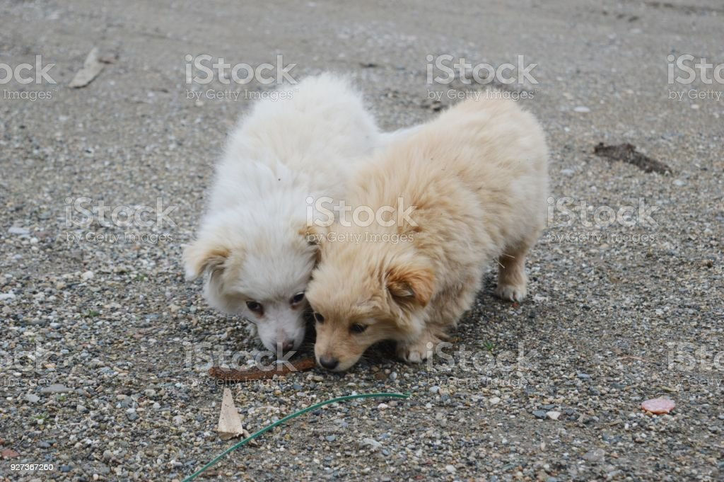 two little puppies of different colors two little puppies of different colors Animal Stock Photo