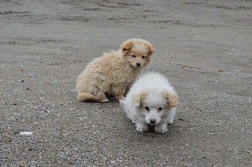 Two Little Puppies Of Different Colors Stock Photo - Download Image Now