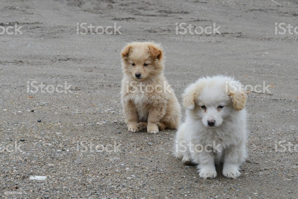 two little puppies of different colors - Royalty-free Animal Stock Photo