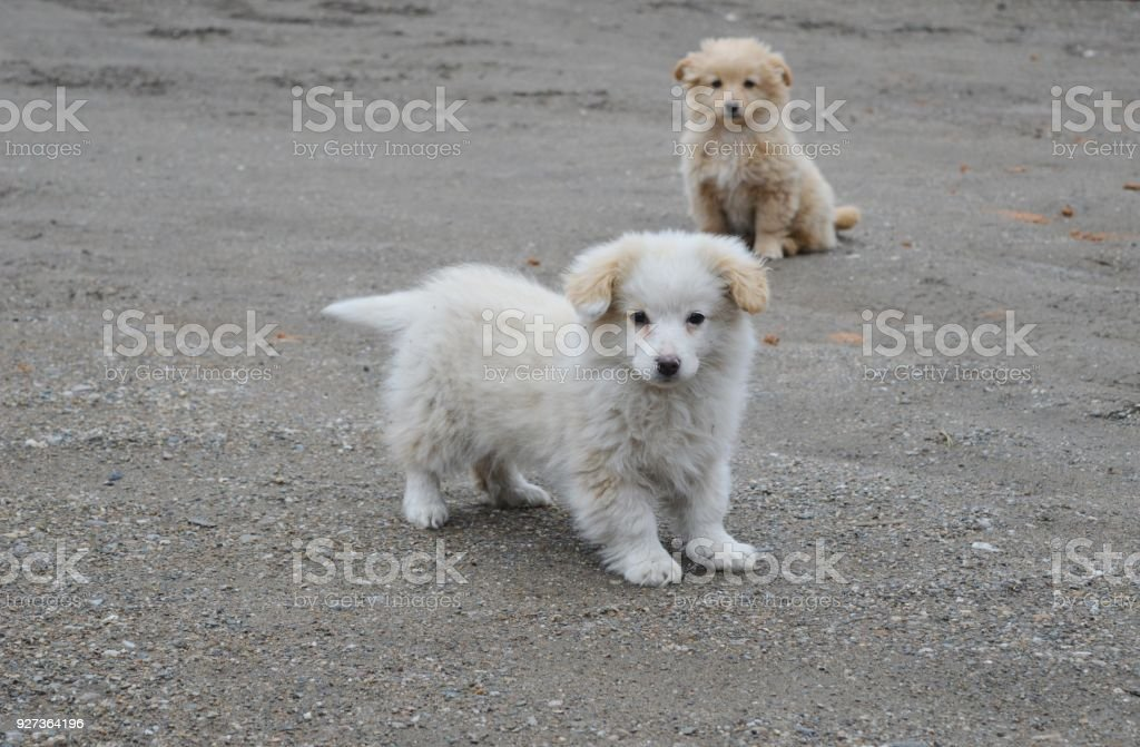 two little puppies - Royalty-free Animal Stock Photo