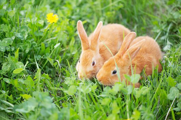 두 개의 작은 토끼 야외 스톡 사진