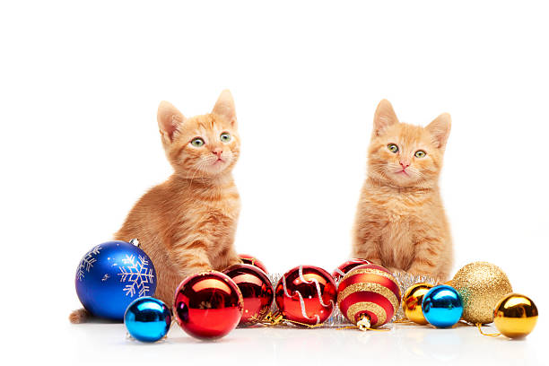 Two little red kittens sitting near colorful christmas toys picture id489979936?b=1&k=6&m=489979936&s=612x612&w=0&h=9ktgbfupqd  agtanpmjjg8ynakhfzkx08dyqswv4jo=