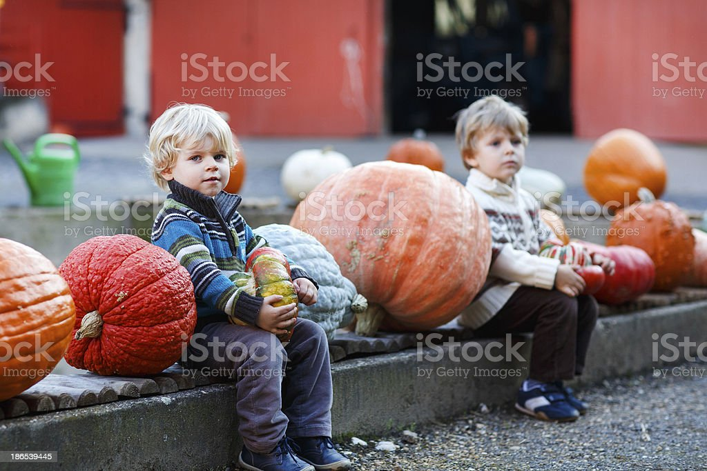 Two little siblings boys on pumpkin patch farm royalty-free stock photo
