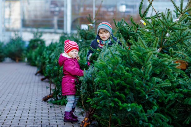 Two little siblings toddler girl and kid boy holding Christmas tree on a market. Happy children in winter fashion clothes choosing and buying Xmas tree in outdoor shop. Family, tradition, celebration stock photo
