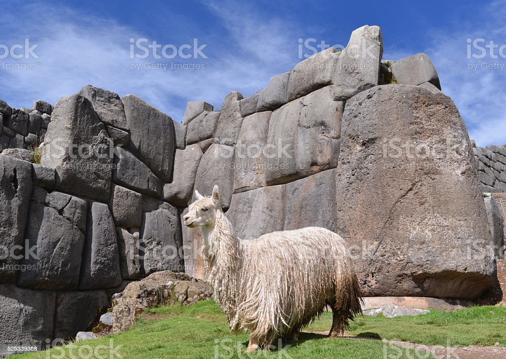 Two llamas facing each other, Cusco, Peru stock photo