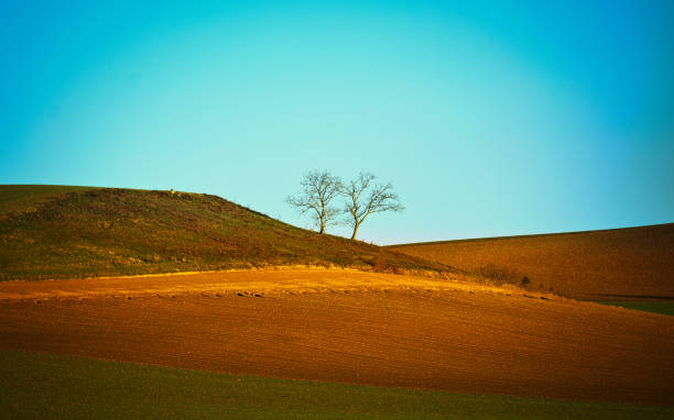 Two lost trees stock photo