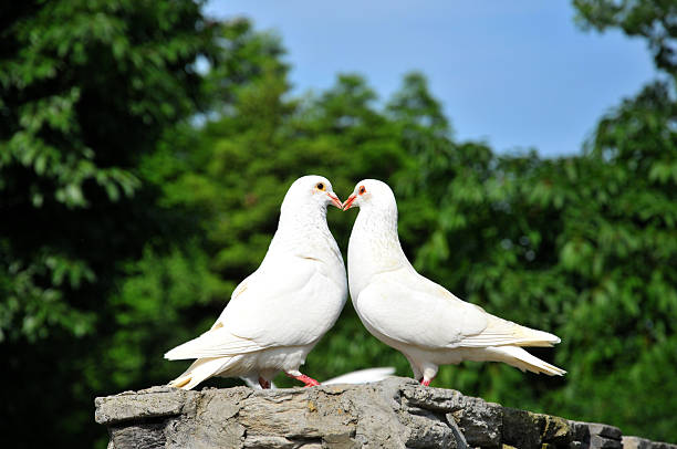 Best Love Birds Stock Photos Pictures Royalty Free Images