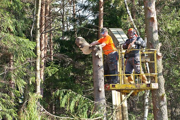Two lumberjacks cut down a tree on the platform stock photo