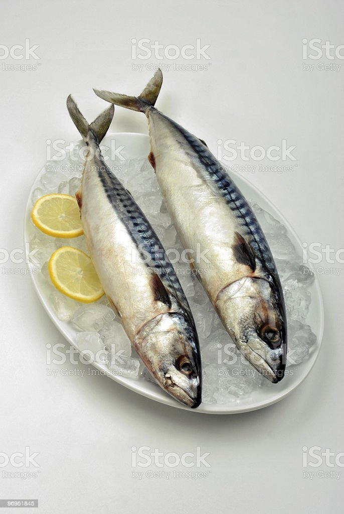 two mackerel on a white plate with ice royalty-free stock photo