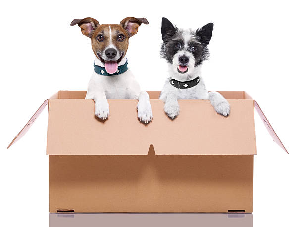 Two mail dogs picture id187467999?b=1&k=6&m=187467999&s=612x612&w=0&h=qpmfxz4t1bti513qezactoworh23pdyltjopt3kky a=