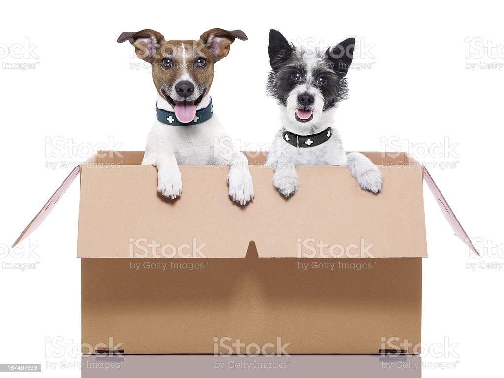 Zwei mail Hunde – Foto