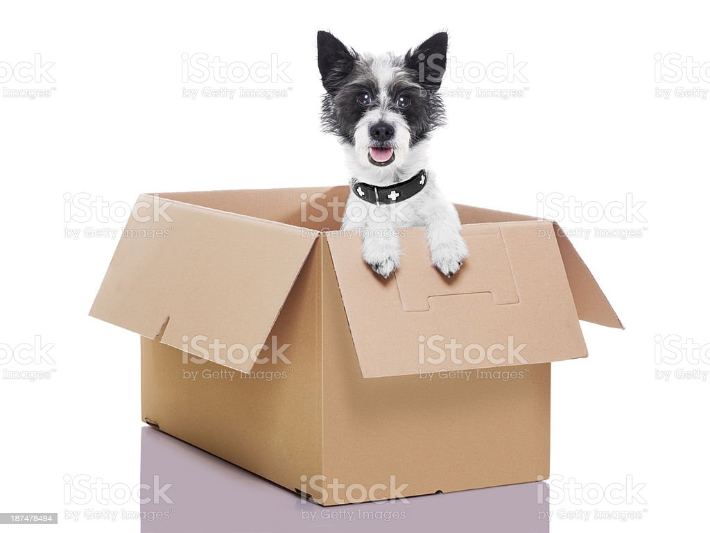 two mail dogs stock photo