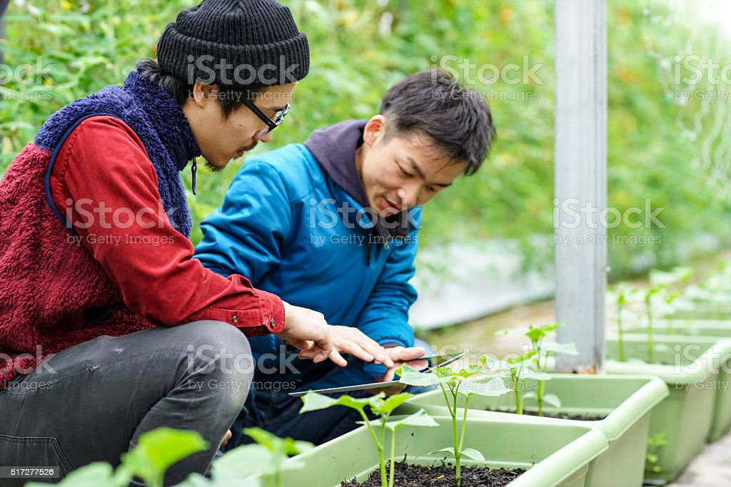 Two mid adult men using wireless technology in agriculture stock photo