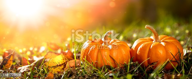 istock Two Mini Pumpkins And Leaves In Grass 1181725528