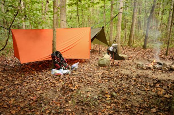 Two modern camping hammocks in woods with tarps stock photo