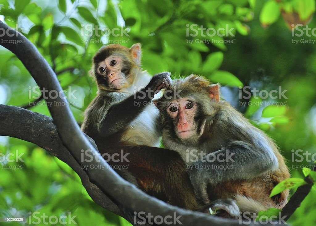 Two monkeys in the woods stock photo