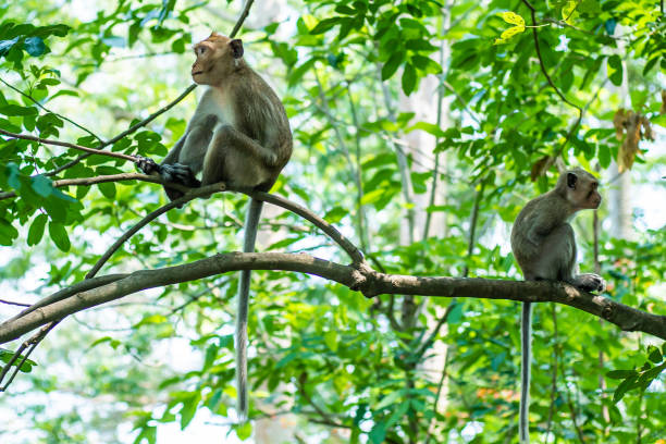 two monkeys. sitting back to back on a roof top and looking away. offended at each other - macaco foto e immagini stock