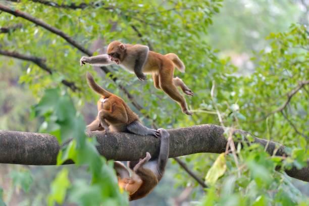 Zwei Affen spielten auf einem Baumstamm – Foto