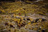 Mountain bikers riding through Peruvian Andes.  Ausangate bike packing trip, Peru.