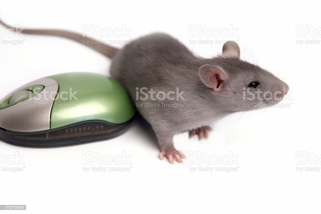 Two mousies royalty-free stock photo