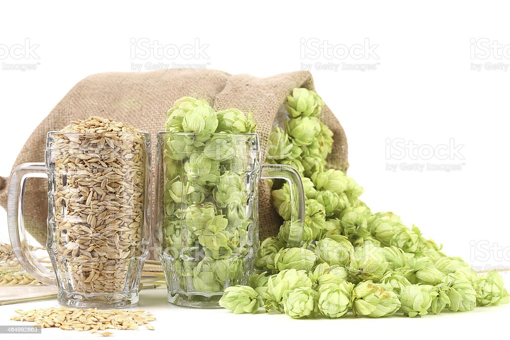 Two mugs with barley and hop. stock photo