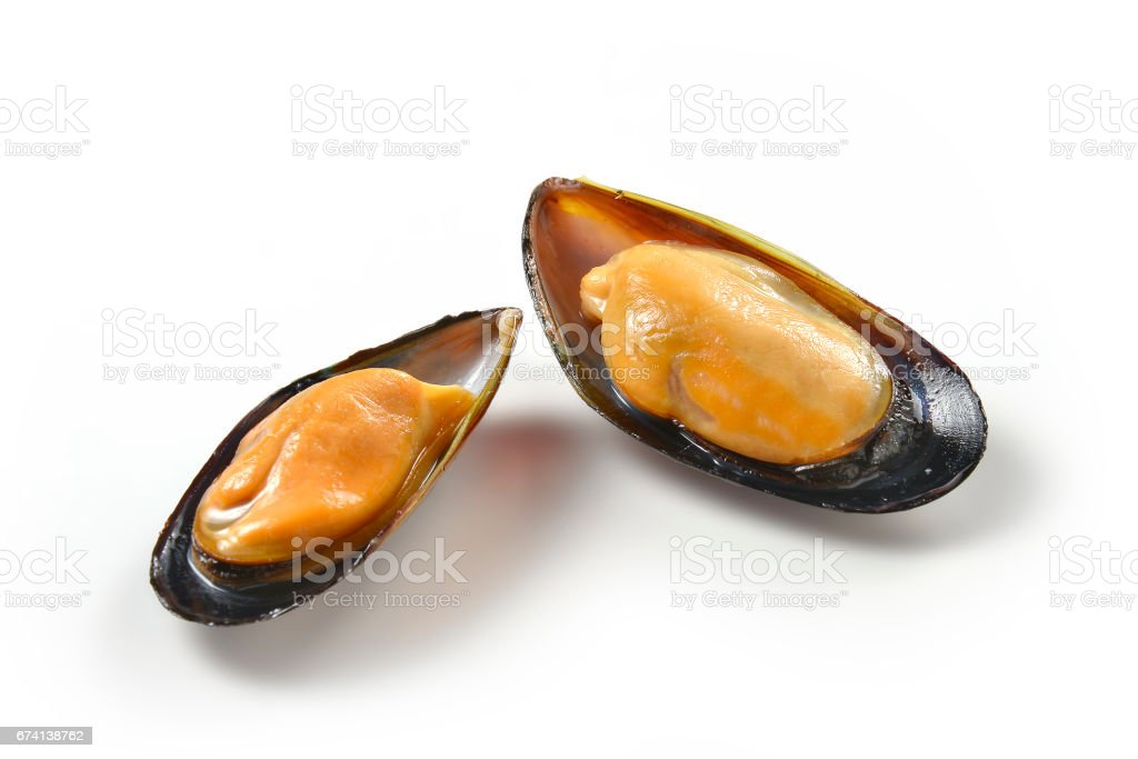 Two mussels isolated on white background stock photo