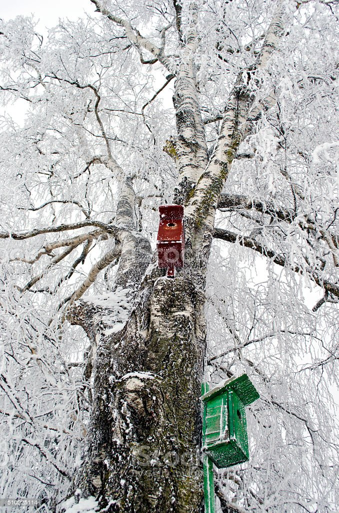 Two nesting boxes on frosted birch tree stock photo