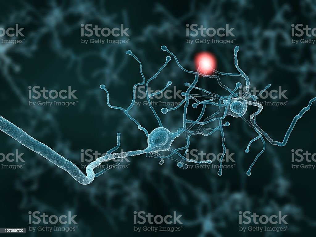 Two neurons royalty-free stock photo