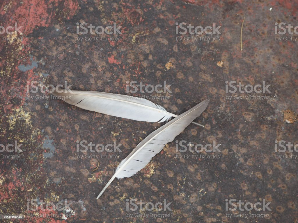 Two of feather on the ground. stock photo