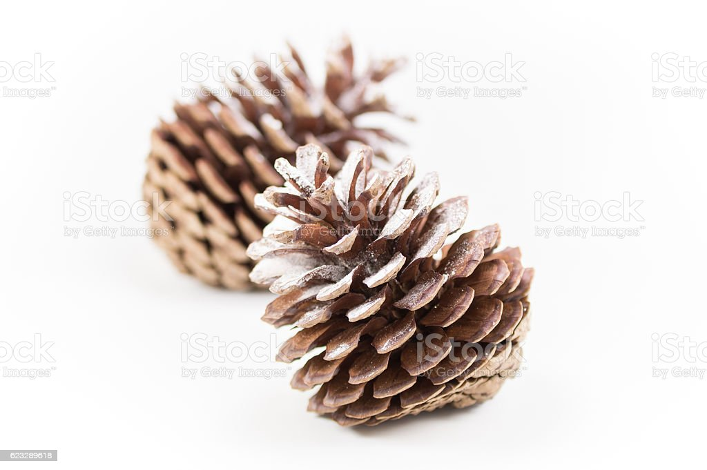 Two open pinecones on a white background. Shallow focus. stock photo