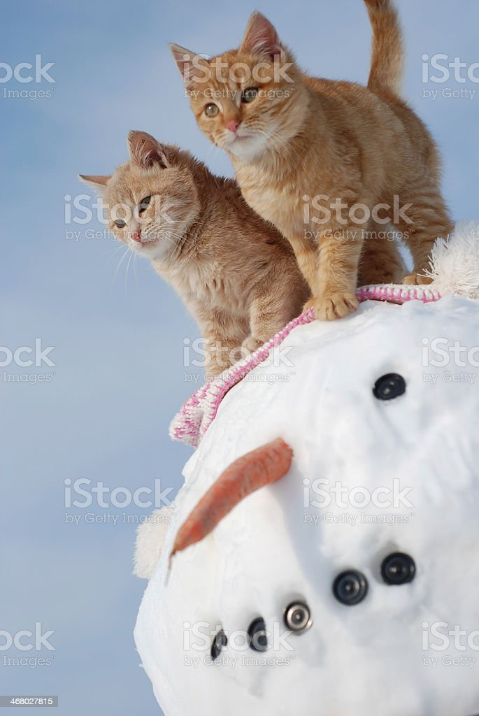 Two orange kittens atop a large snowman stock photo