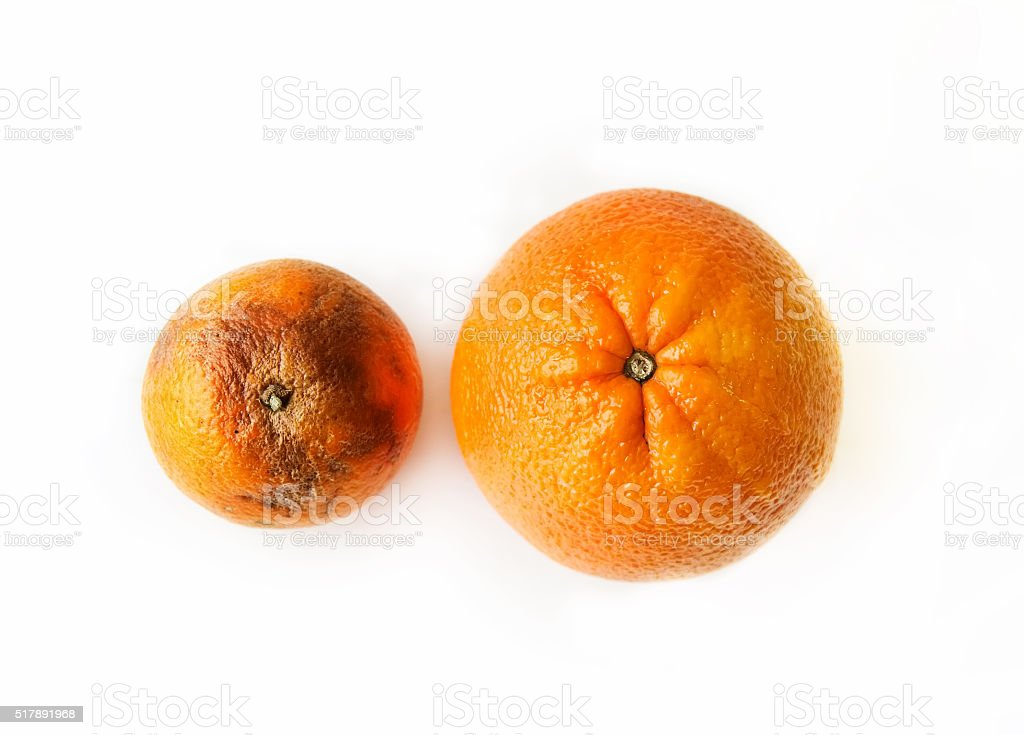 Two oranges - beautiful ripe and ugly rotten stock photo