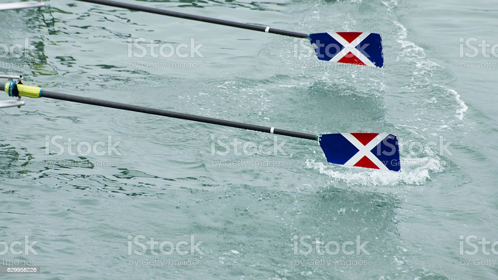Two ores glide out of the water stock photo
