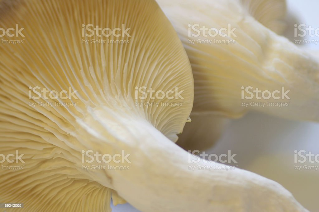 Two oyster mushrooms stock photo