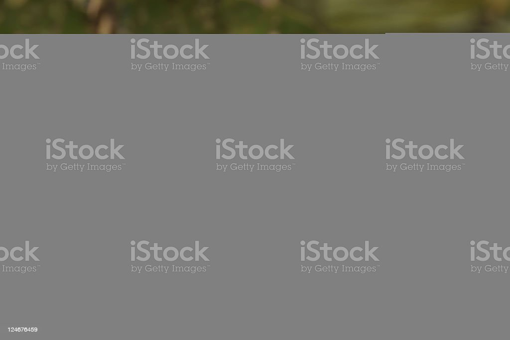 Two Pair stock photo