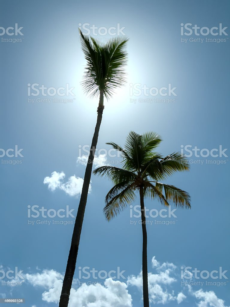 Two palm trees against the sky with clouds stock photo