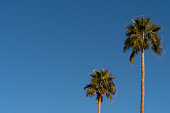 Two palm trees and a clear blue sky in Palm Springs desert.