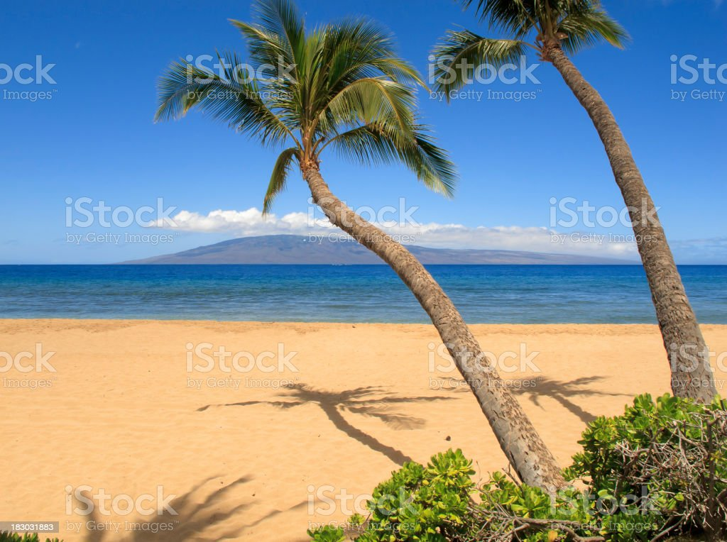 Two palm trees on a tropical beach royalty-free stock photo