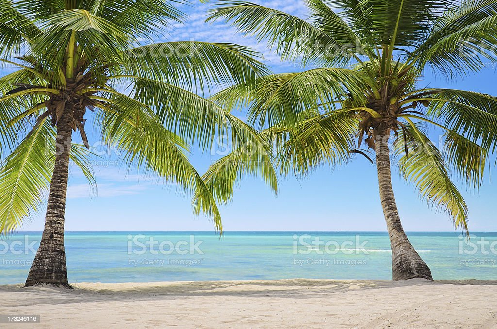 Two palm trees on an exotic beach in Saona Islands royalty-free stock photo
