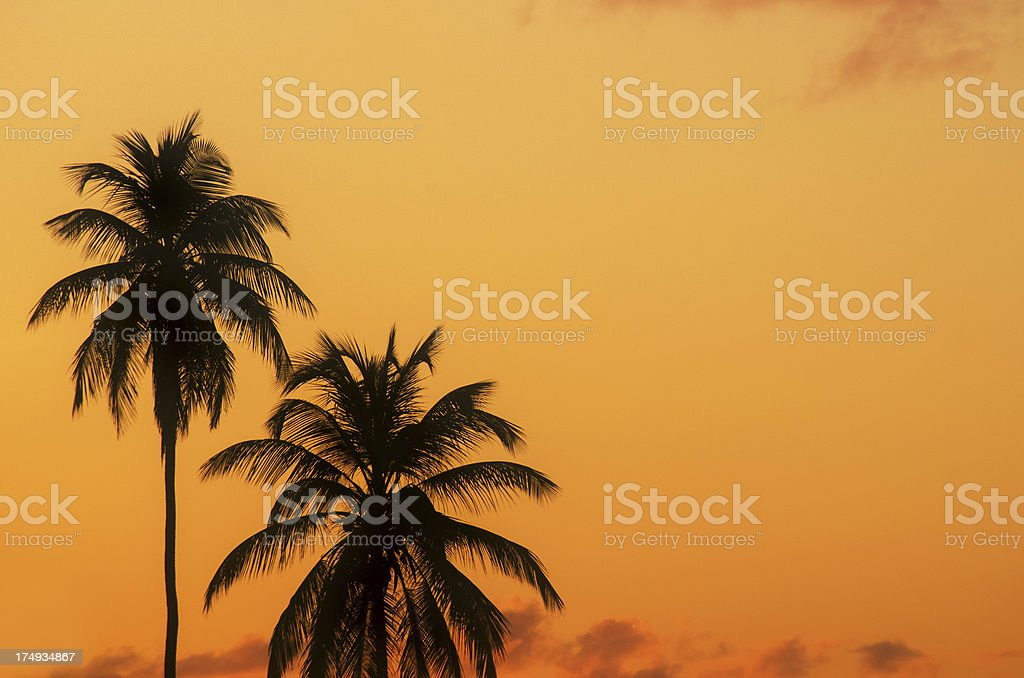 two palm trees on orange sky at sunset royalty-free stock photo