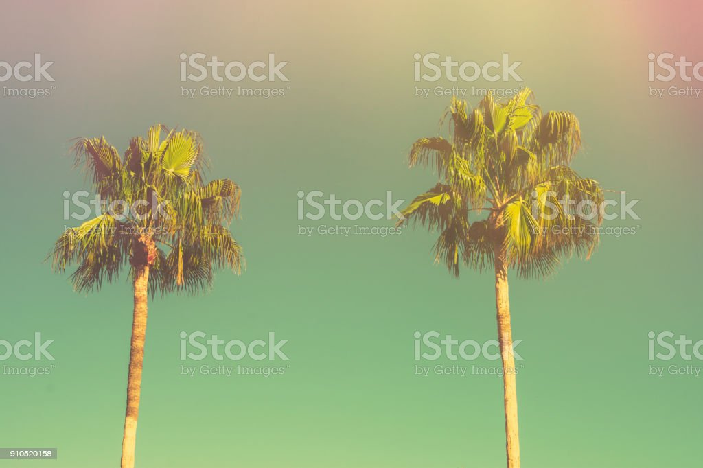 Two Palm Trees On Toned Light Turquoise Sky Background 60s Vintage