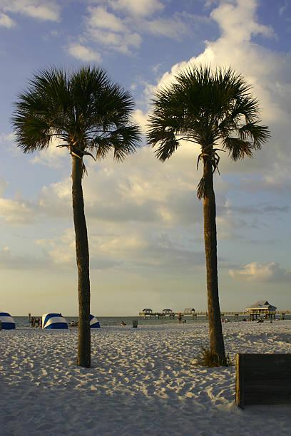 zwei palmen - zelt stehhöhe stock-fotos und bilder