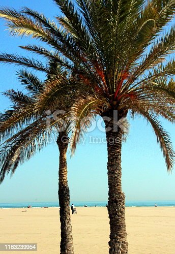 1145102719istockphoto Two palm trees with the background of the vast sunny beach and the sea 1183239954