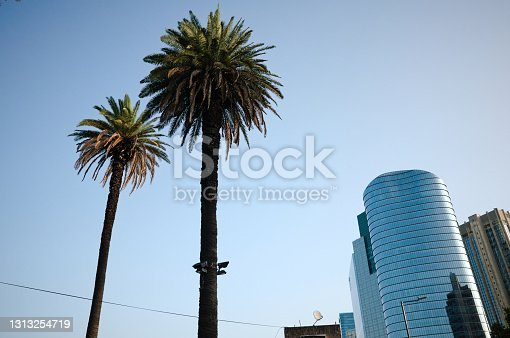 Two palms against clear blue sky with lanterns on trunk and building of skyscrapers made of glass on the background. Urban landscape with height palm trees and buildings in modern architectural style