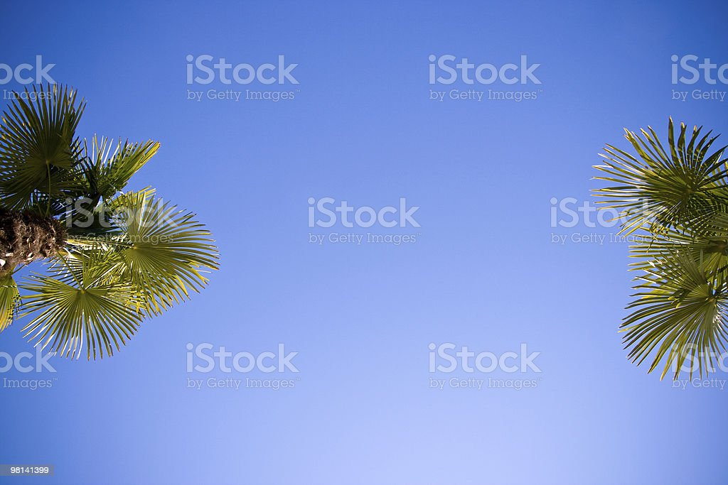 Two palms royalty-free stock photo