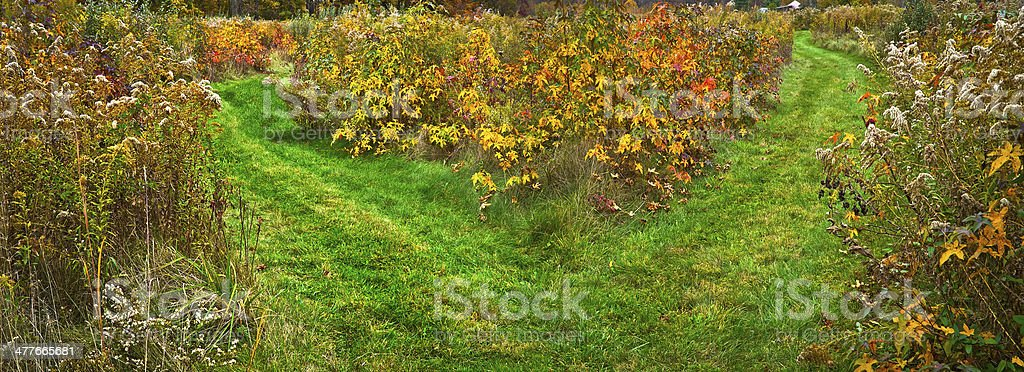 Two Paths Panorama royalty-free stock photo